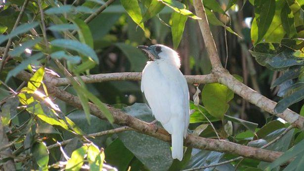 biodiversité Guyane