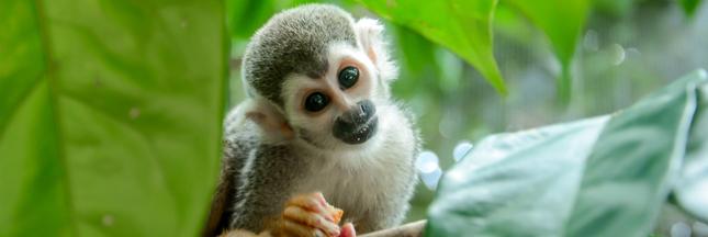 Alerte en Guyane : la liste rouge des espèces menacées s'allonge