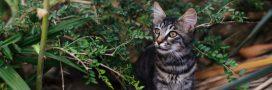 Chat abandonné: une double peine pour lui et pour la faune sauvage