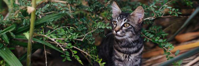 Chat abandonné : une double peine pour lui et pour la faune sauvage