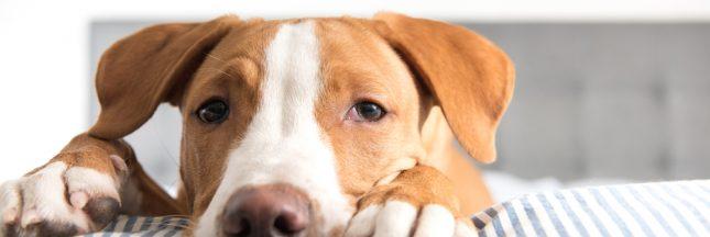 Protéger ses animaux des risques d'empoisonnement