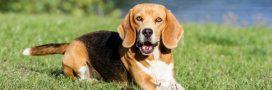 119 chiens et chats sauvés des laboratoires et adoptés via la SPA