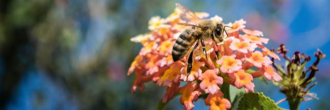 """Demain pour sauver la biodiversité, plantez 'des fleurs pour les abeilles"""""""