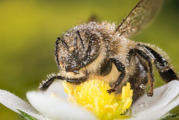 Dijon, ruches sans liel, abeille