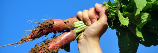 États généraux de l'alimentation: quelle place pour les enjeux environnementaux?