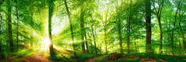 Les forêts françaises pourraient être une arme contre le réchauffement climatique