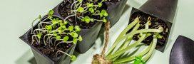 Les graines bio: le guide d'achat