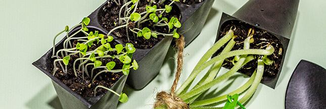 Les graines bio : le guide d'achat