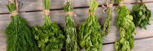 Toutes les vertus des herbes aromatiques du jardin