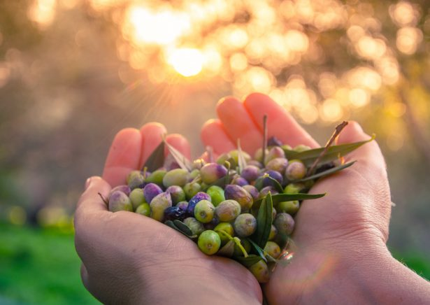 huile d'olive française
