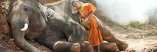 Étudier les éléphants aiderait à comprendre l'insomnie humaine
