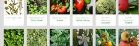 MyGardenMap, le Wikipédia des plantes cultivées