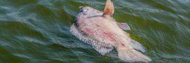 La pêche industrielle gaspille 10 millions de tonnes de poissons par an