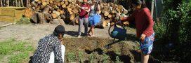 Près de Paris, des réfugiés plantent un potager en permaculture