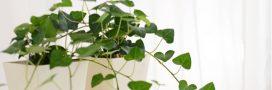 Entretenir ses plantes d'intérieur en juin