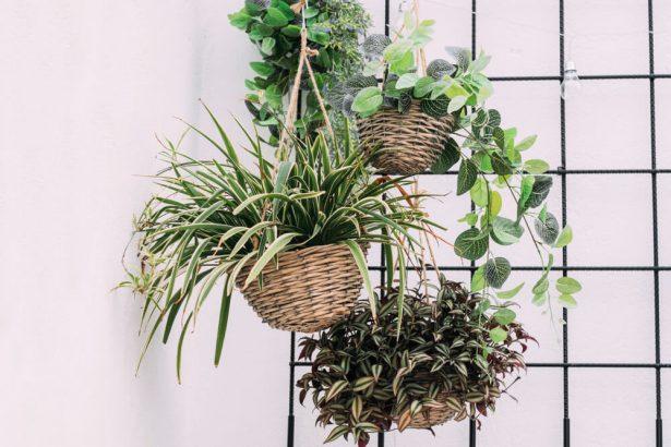 plantes intérieur juin