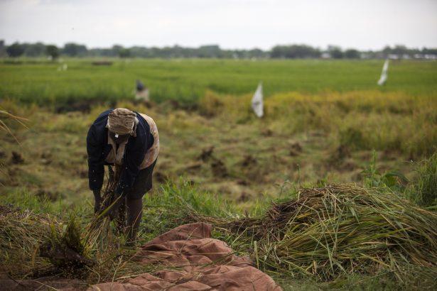 pôles de croissance agricole