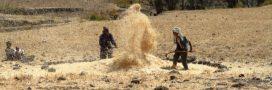 Les pôles de croissance agricole: un facteur d'aggravation de l'insécurité alimentaire en Afrique