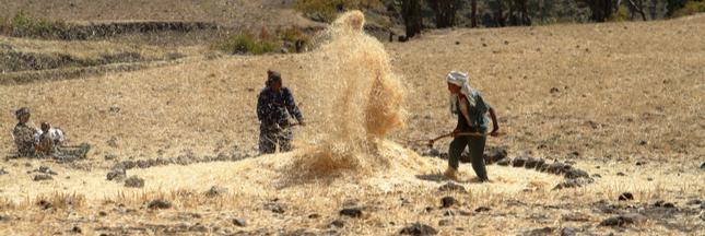 Les pôles de croissance agricole : un facteur d'aggravation de l'insécurité alimentaire en Afrique