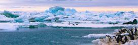 Pollution plastique en Antarctique: la situation est pire qu'on le pensait…