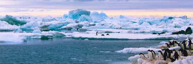 Pollution plastique en Antarctique : la situation est pire qu'on le pensait...