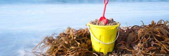 Un ingénieur breton crée des jouets de plage à base d'algues!