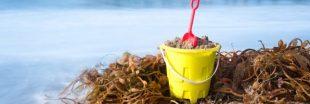 Un ingénieur breton crée des jouets de plage à base d'algues !
