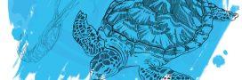 Manger des crevettes nuit gravement… aux tortues marines