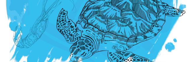 Manger des crevettes nuit gravement... aux tortues marines