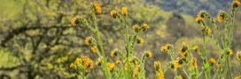 Pesticides: le Parlement européen fait un petit geste pour la biodiversité