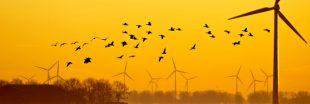 Les éoliennes ne massacrent pas les oiseaux, confirme la LPO