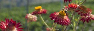 Pesticides : deux études confirment la nocivité des néonicotinoïdes