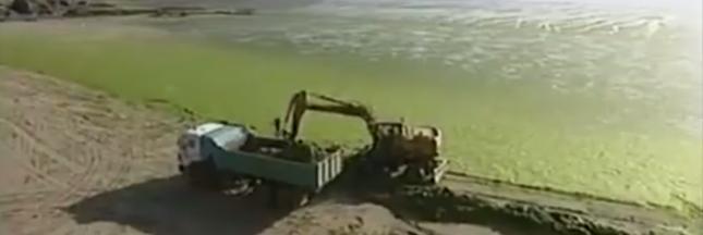 Plan rouge contre les algues vertes sur les plages bretonnes