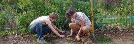 Envie d'un jardin en permaculture? Arbraculture vous accompagne