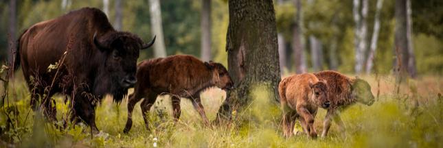 L'UE tente d'arrêter le massacre dans la dernière forêt primaire d'Europe