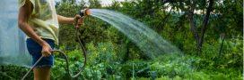 Calendrier jardinage: jardiner en juillet