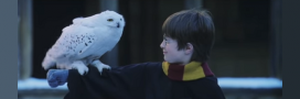Comment Harry Potter contribue à l'extinction des chouettes en Indonésie