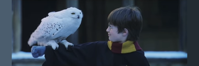 Comment harry potter contribue l 39 extinction des chouettes en indon sie - Harry potter chouette ...