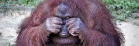 La 6e extinction de masse s'accélère dramatiquement
