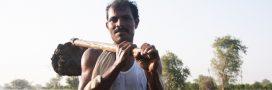 L'Inde plante 67 millions d'arbres en 12 heures. Un nouveau record de reforestation!