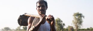 L'Inde plante 67 millions d'arbres en 12 heures. Un nouveau record de reforestation !