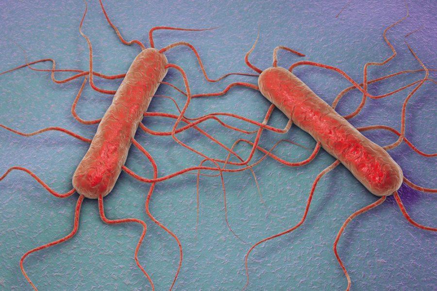 listeria-monocytogenes_shutterstock_400088737-e1499779291441.jpg