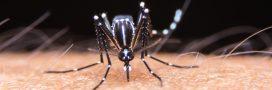 Google s'apprête à lâcher 40 millions de moustiques dans la nature