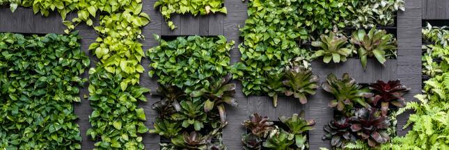 Créer un mur végétal sur son balcon