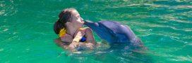 Nager avec les dauphins: une pratique dangereuse