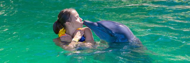 Nager avec les dauphins : une pratique dangereuse