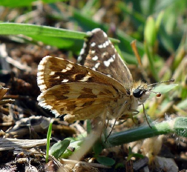 papillons menaces