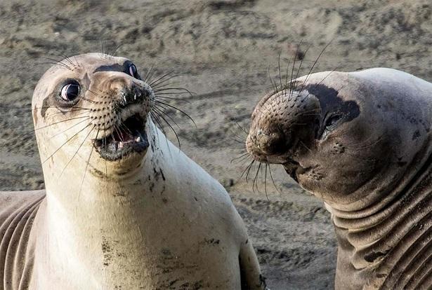 photos animaux phoques