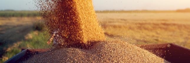 La demande mondiale en produits agricoles et alimentaires se ralentit