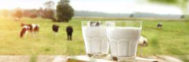 Rappel produit – lait demi-écrémé -bouteilles de 50 cl – Candia – Auchan – Grand Jury – Carrefour Bio – Biovillage